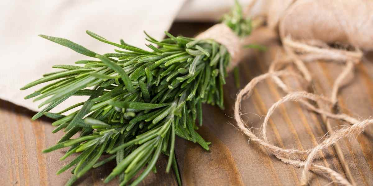 rosemary as a remedy for acne scars